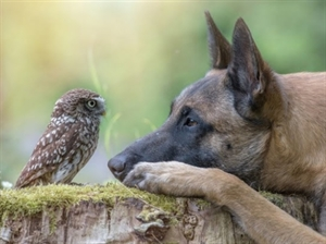 An Owl and His Dog - Your Moment of Zen